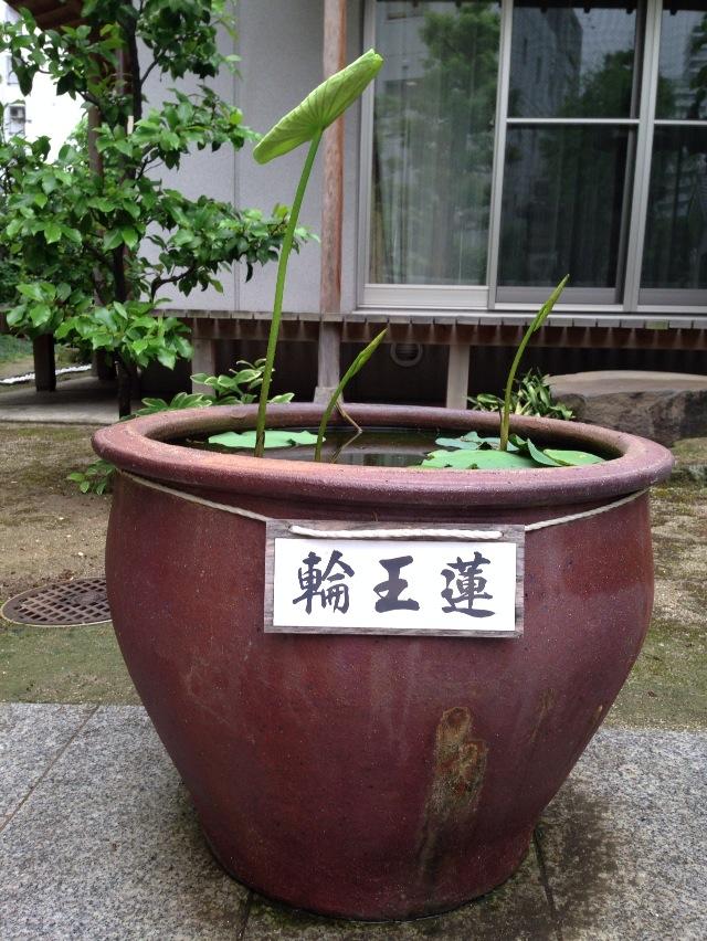 20130530 輪王蓮