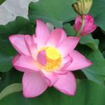 開花真っ盛り